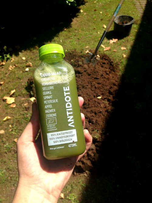 antidote_cleanse_liquid_salad_vorher_coultique