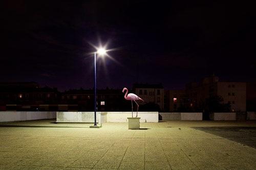 Sébastien Vincent – Animal Kingdom