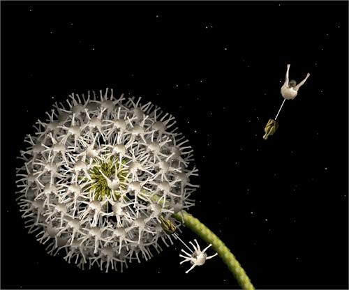 cecelia_webber_floratography_01_coultique