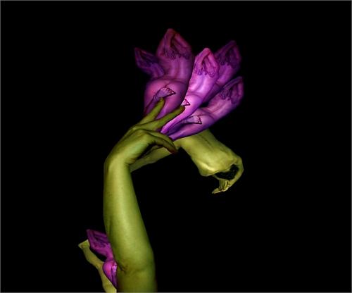 cecelia_webber_floratography_09_coultique