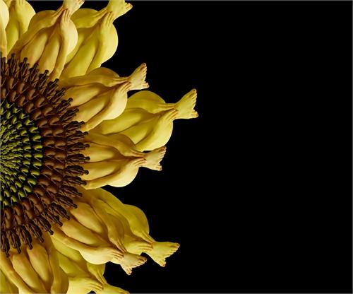 cecelia_webber_floratography_14_coultique