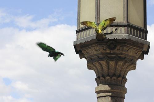 julian_charriere_pigeons_03_coultique