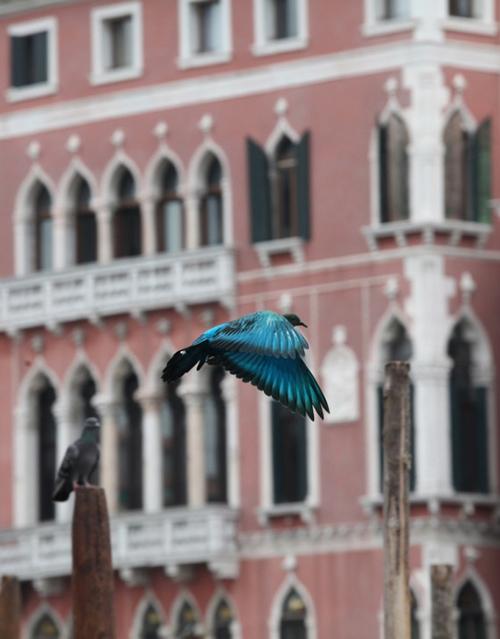julian_charriere_pigeons_05_coultique