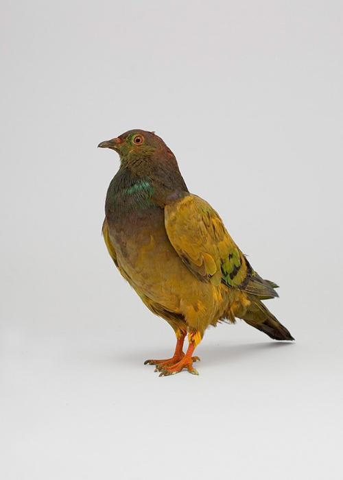 julian_charriere_pigeons_09_coultique