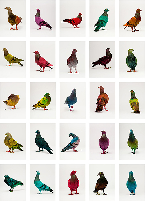 julian_charriere_pigeons_17_coultique