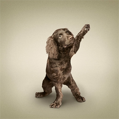 alejandra_und_dan_boris_yoga_dogs_yoga_cats_01_coultique