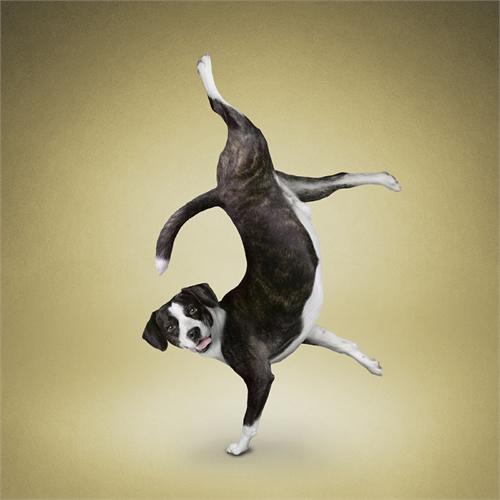 alejandra_und_dan_boris_yoga_dogs_yoga_cats_02_coultique