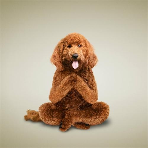 alejandra_und_dan_boris_yoga_dogs_yoga_cats_04_coultique