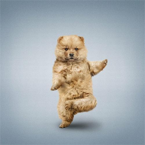 alejandra_und_dan_boris_yoga_dogs_yoga_cats_05_coultique