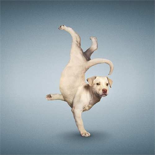 alejandra_und_dan_boris_yoga_dogs_yoga_cats_06_coultique
