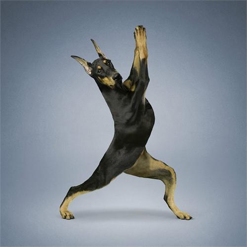 alejandra_und_dan_boris_yoga_dogs_yoga_cats_07_coultique