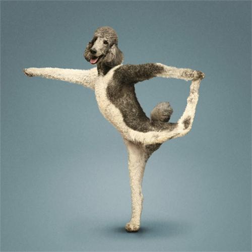 alejandra_und_dan_boris_yoga_dogs_yoga_cats_08_coultique