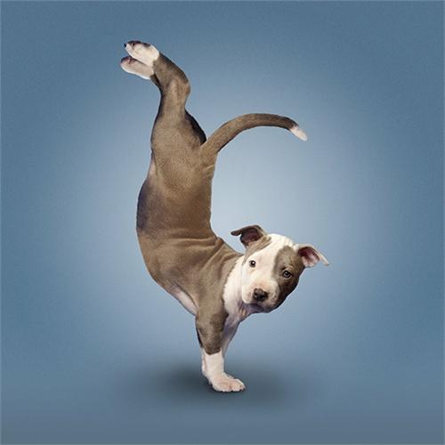 alejandra_und_dan_boris_yoga_dogs_yoga_cats_09_coultique