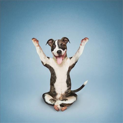 alejandra_und_dan_boris_yoga_dogs_yoga_cats_10_coultique