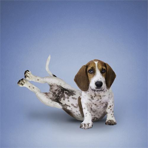 alejandra_und_dan_boris_yoga_dogs_yoga_cats_12_coultique
