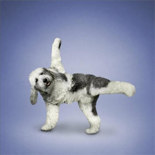 alejandra_und_dan_boris_yoga_dogs_yoga_cats_13_coultique