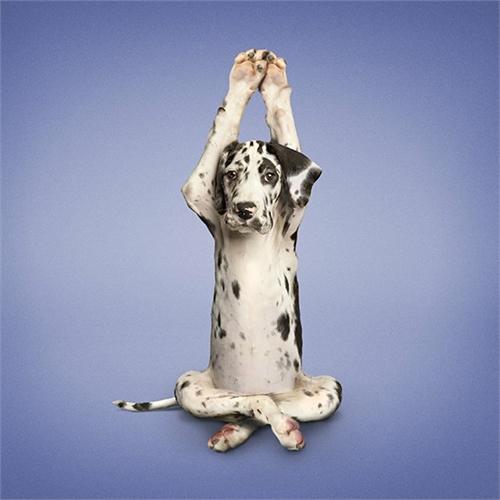 alejandra_und_dan_boris_yoga_dogs_yoga_cats_14_coultique