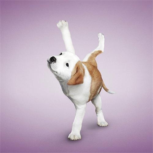 alejandra_und_dan_boris_yoga_dogs_yoga_cats_15_coultique