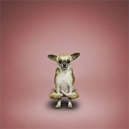 alejandra_und_dan_boris_yoga_dogs_yoga_cats_17_coultique
