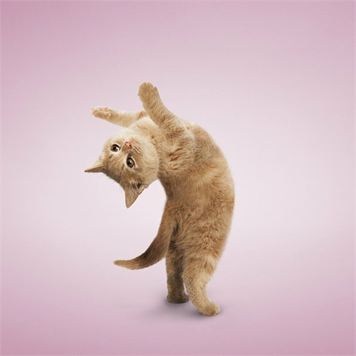 alejandra_und_dan_boris_yoga_dogs_yoga_cats_18_coultique