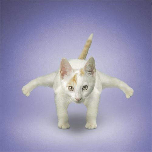 alejandra_und_dan_boris_yoga_dogs_yoga_cats_19_coultique