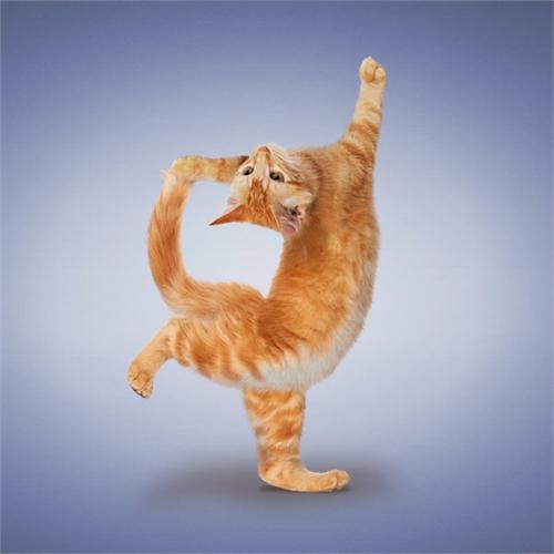 alejandra_und_dan_boris_yoga_dogs_yoga_cats_20_coultique
