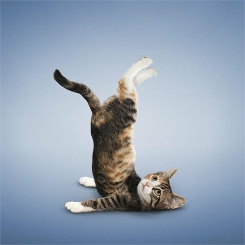 alejandra_und_dan_boris_yoga_dogs_yoga_cats_21_coultique