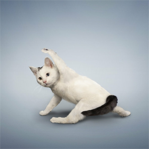 alejandra_und_dan_boris_yoga_dogs_yoga_cats_22_coultique