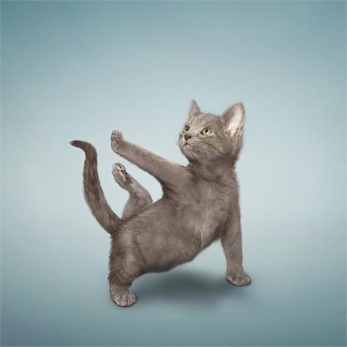 alejandra_und_dan_boris_yoga_dogs_yoga_cats_23_coultique
