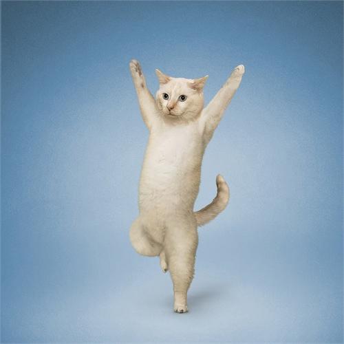 alejandra_und_dan_boris_yoga_dogs_yoga_cats_24_coultique