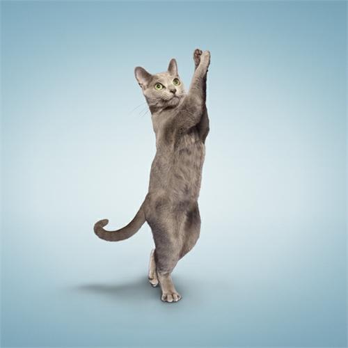 alejandra_und_dan_boris_yoga_dogs_yoga_cats_27_coultique