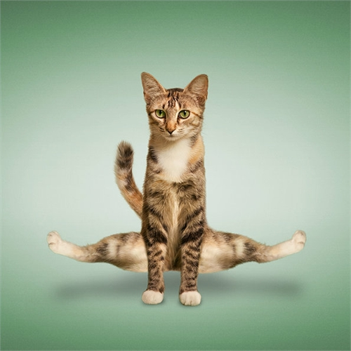 alejandra_und_dan_boris_yoga_dogs_yoga_cats_30_coultique