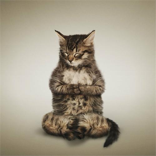 alejandra_und_dan_boris_yoga_dogs_yoga_cats_31_coultique