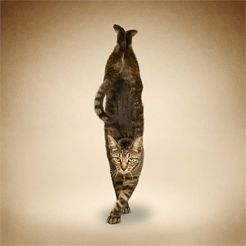 alejandra_und_dan_boris_yoga_dogs_yoga_cats_33_coultique