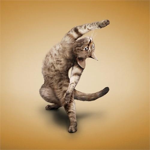 alejandra_und_dan_boris_yoga_dogs_yoga_cats_34_coultique