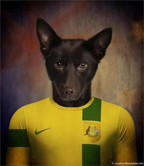 world_cup_dogs_australia_australian_kelpie_coultique