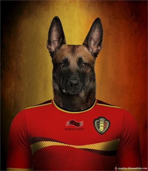 world_cup_dogs_belgium_belgian_shepherd_coultique
