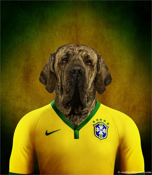 world_cup_dogs_brazil_brazilian_mastiff_coultique