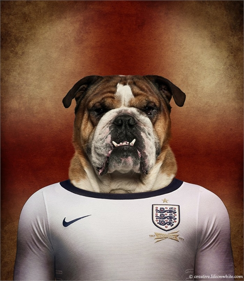 world_cup_dogs_england_english_bulldog_coultique