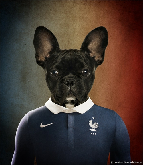 world_cup_dogs_france_french_bulldog_coultique