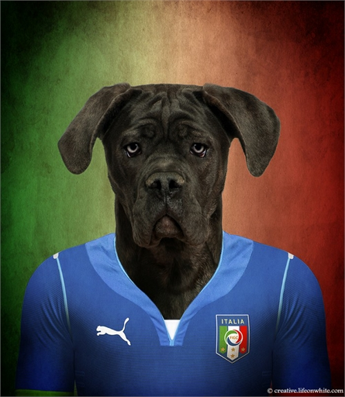 world_cup_dogs_italy_cane_corso_coultique