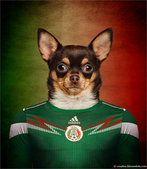 world_cup_dogs_mexico_chihuahua_coultique