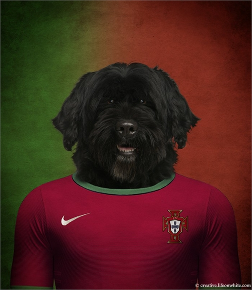 world_cup_dogs_portugal_portuguese_water_dog_coultique