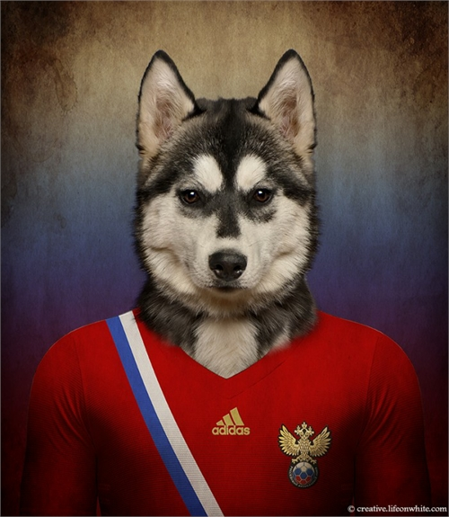 world_cup_dogs_russia_siberian_husky_coultique