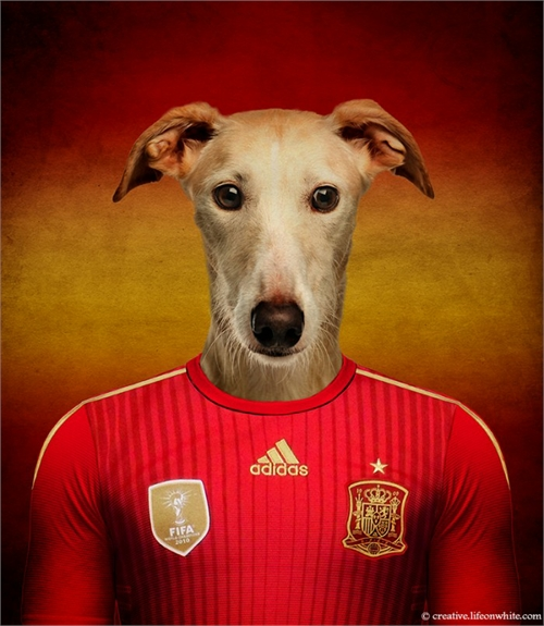 world_cup_dogs_spain_spanish_galgo_coultique