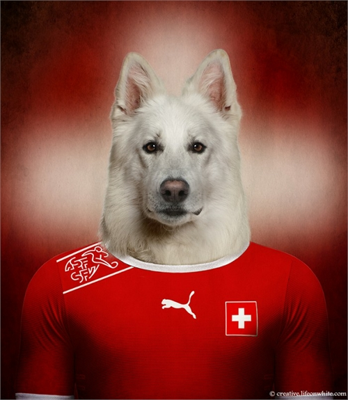world_cup_dogs_switzerland_swiss_white_shepherd_coultique