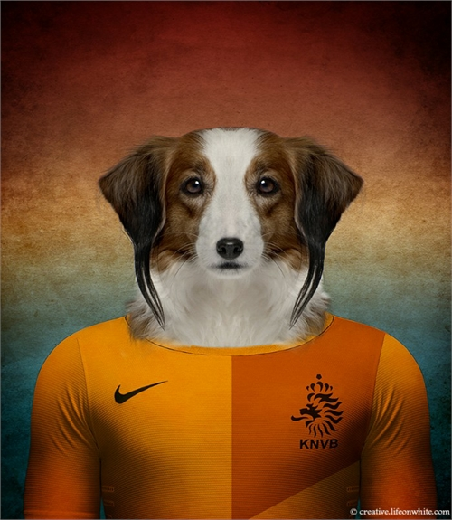 world_cup_dogs_the_netherlands_kooikerhondje_coultique