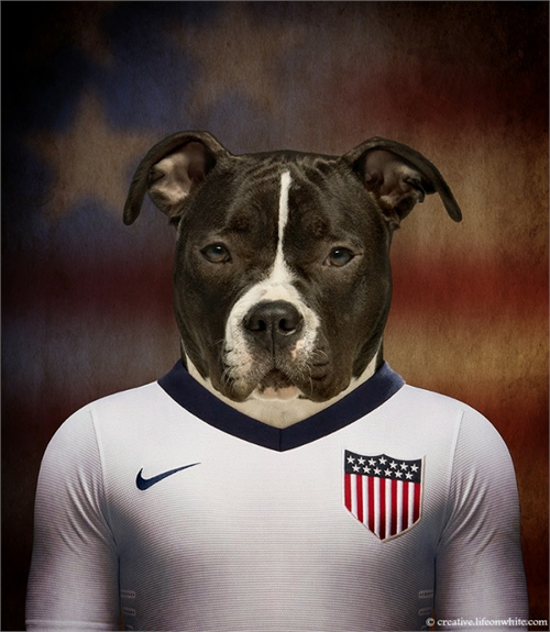 world_cup_dogs_usa_american_staffordshire_terrier_coultique