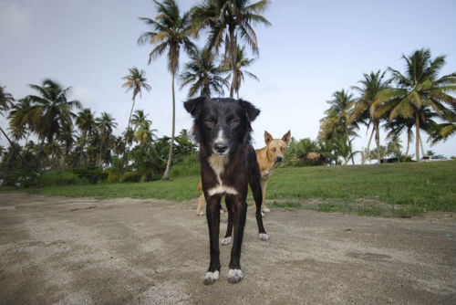 sophie_gamand_dead_dog_beach_15_coultique