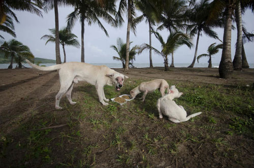 sophie_gamand_dead_dog_beach_17_coultique